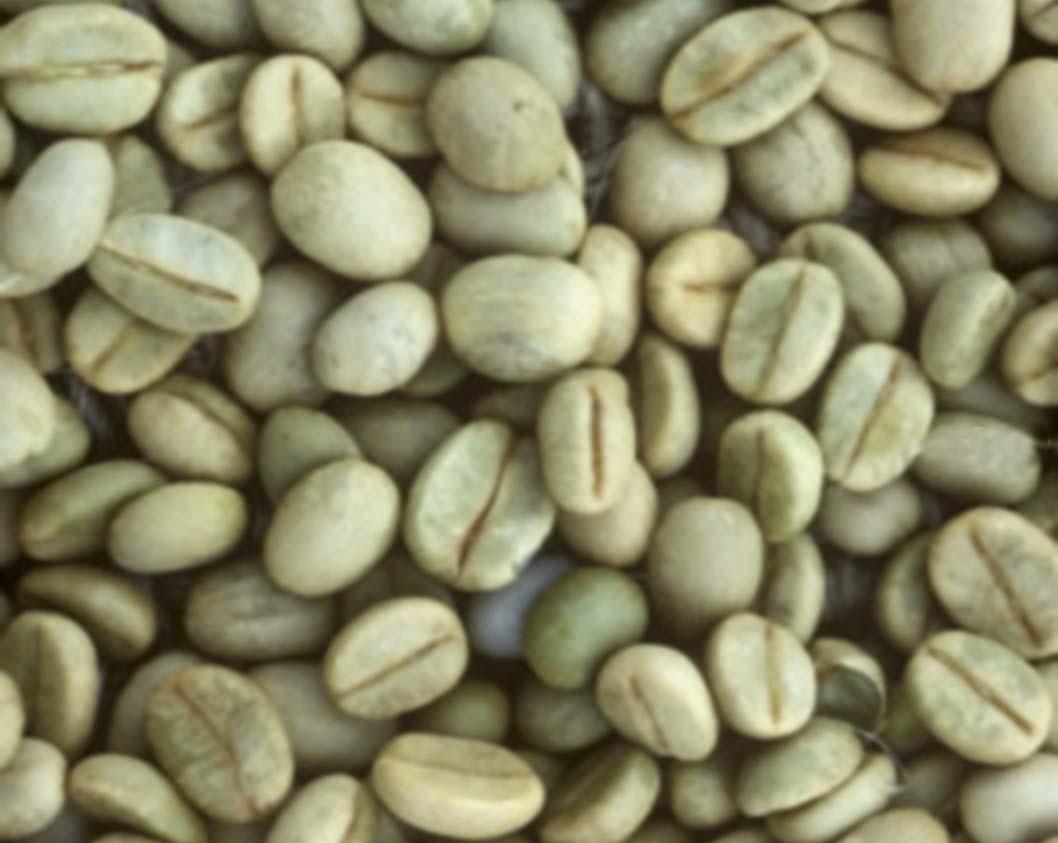 Cà phê hạt rang giá rẻ chất lượng cao tại An Giang